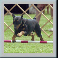 firstagility