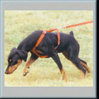 trackdog