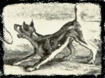 1780-pinschervernets