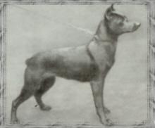 1912oldblackpinscher