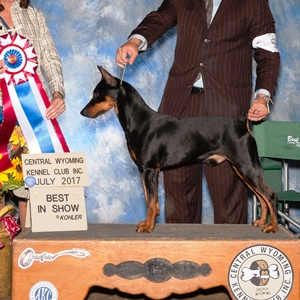 AKC Firsts | The German Pinscher Club of America