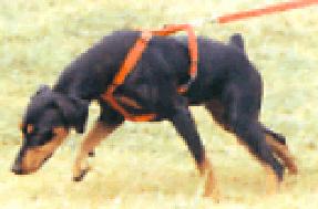 trackbger